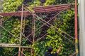 Tukang Taman Vertical Ciganjur